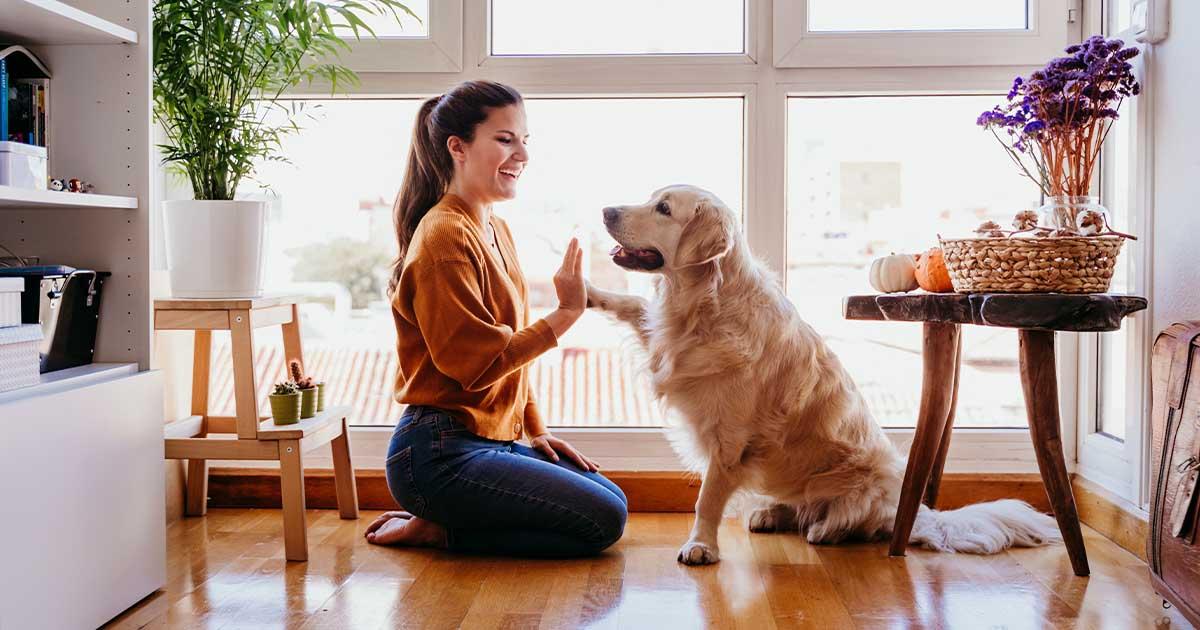 ตั้งชื่อสุนัข สุดเก๋เป็นมงคล ถูกโฉลกกับเจ้าของเรียกทรัพย์เข้าบ้าน - Ruaythairath