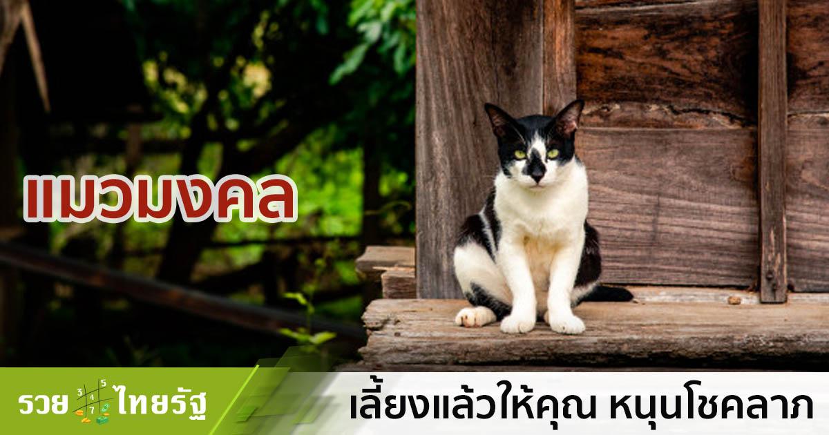 แมวไทย แมวมงคล กวักเงินกวักทองเข้าบ้าน