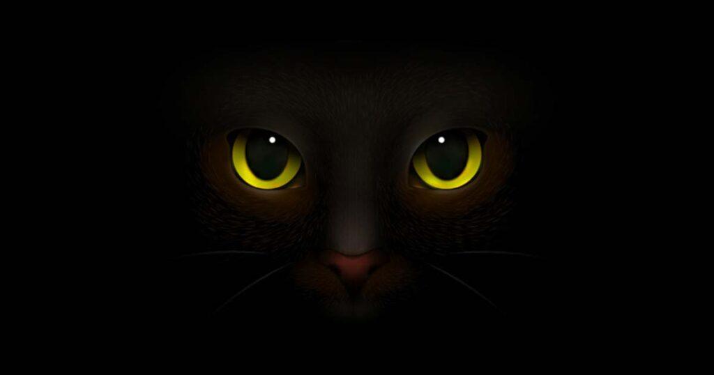 เรื่องราวที่ยาวนาน ตำนาน แมวดำ กับความเชื่อด้านลบ