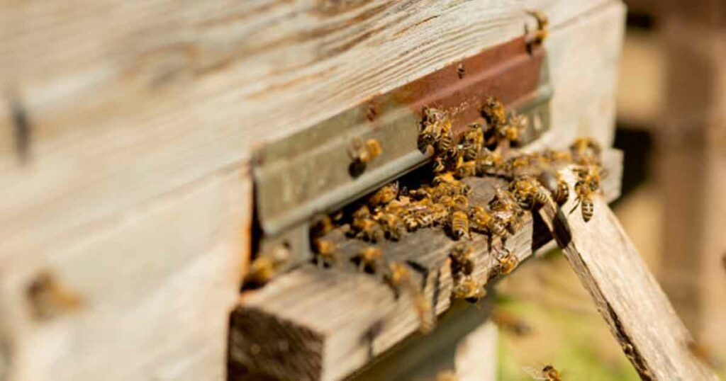 ความเชื่อโบราณ เปิดตำราดู ผึ้งทำรังในบ้าน