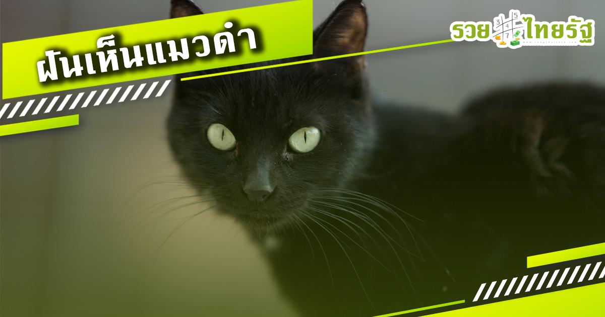 เมื่อคุณ ฝันเห็นแมวดำ ตามคำทำนายโบราณทำนายว่า..